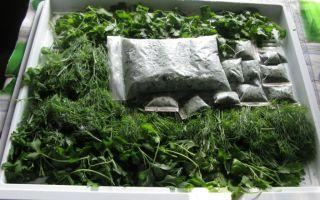 Петрушка на зиму: особенности хранения свежей зелени в холодильнике, заморозка, засолка и сушка