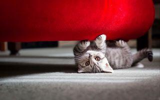 Как отучить кота драть обои и мебель: почему кошки это делают, использование когтеточки, народные способы