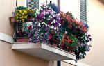 Как выбрать цветы для балкона на лето: свето- и тенелюбивые растения, красивоцветущие и зеленые виды