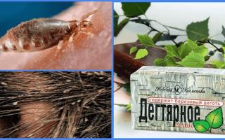Дегтярное мыло от вшей: дёготь и мыло из него, как вывести им вшей, шампунь против педикулёза и отзывы