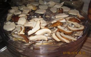 Как сушить белые грибы: способы сушки в домашних условиях, пошаговая инструкция