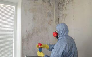 Что делать, если в квартире плесень на стене: чем обработать стены для удаления черных разводов