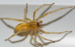 Домашние пауки: причины появления, разновидности, польза и опасность для человека