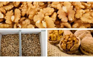 Как хранить орехи в домашних условиях: срок годности и хранение дома