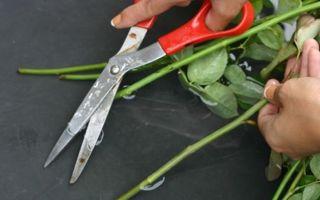 Чтобы розы дольше стояли в вазе: рекомендации по уходу за растениями, как реанимировать и сохранить букет
