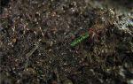 Вредители комнатных растений в почве: борьба с мелкими насекомыми и червяками