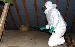 Как избавиться от осиного гнезда, способы борьбы с осами на даче, квартире или частном деревянном доме