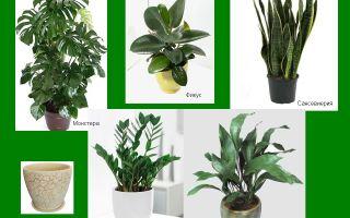 Неприхотливые тенелюбивые комнатные растения: названия растений для офиса и дома, правила ухода и размножения