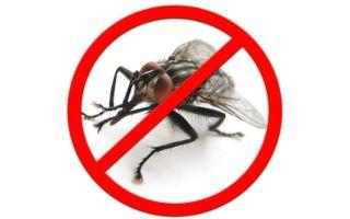Как избавиться от мух в загородном доме, квартире и офисе: борьба с насекомыми, эффективные средства