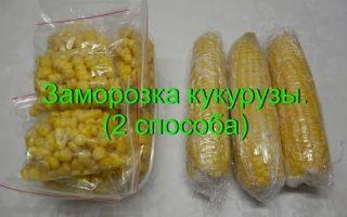 Как заморозить кукурузу на зиму в зернах и початках, как хранить ферментированную кукурузу