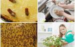 Как избавиться от маленьких мошек на кухне в квартире: откуда появляются, способы борьбы и профилактика