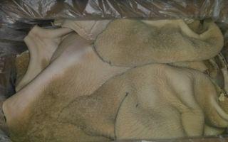 Говяжий рубец: польза и вред, особенности очистки, как приготовить в домашних условиях