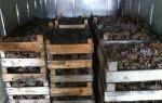 Как правильно хранить виноград в домашних условиях: в погребе, подвале и холодильнике, сроки годности сортов