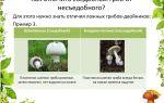 Как отличить съедобный гриб от несъедобного и узнать, не ядовитый ли он: рекомендации по распознаванию грибов