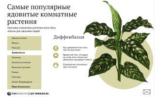 Комнатные цветы, которые нельзя держать дома (фото): ядовитые и вызывающие аллергию, приметы