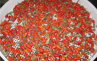 Сушка шиповника: сбор ягод и заготовка на зиму, в электрической духовке и электросушилке, правила хранения