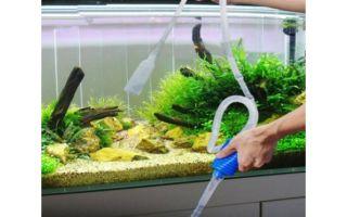 Чистка аквариума в домашних условиях: использование сифона, удаление известкового налета, уход за растениями