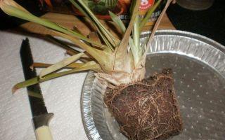 Как сохранить зеленый лук свежим: заморозка, сушка, лучшие условия хранения