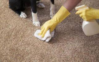 Как правильно мыть полы шваброй: как сделать это быстро и чисто после покраски покрытия