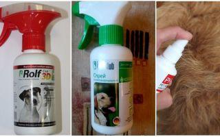 Как вывести блох у кота в домашних условиях: эффективные способы выведения, средства профилактики