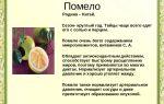 Как выбрать спелый помело: полезные свойства фрукта, противопоказания, с чем употреблять цитрус